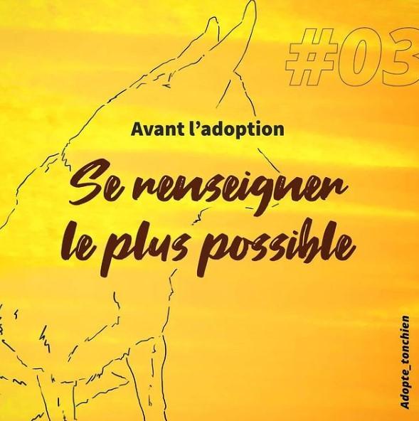 Manon a créé un feed Insta très harmonieux pour son projet Adopte ton chien